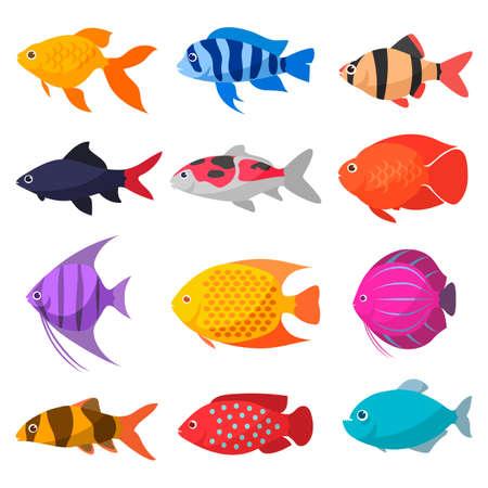 pez dorado: Conjunto de dibujos de peces de acuario de agua dulce. variedades de peces ornamentales populares color. Diseño plano. Vectores