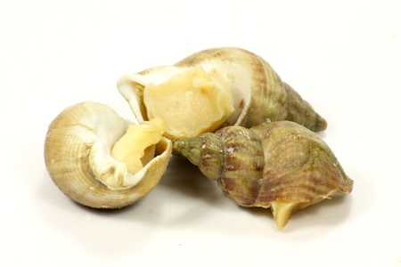whelk Stock Photo - 15754371