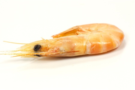 shrimp Stock Photo - 15754356