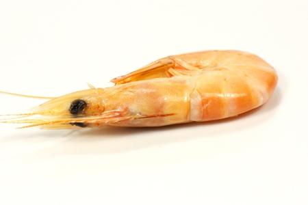 shrimp Stock Photo - 15754369