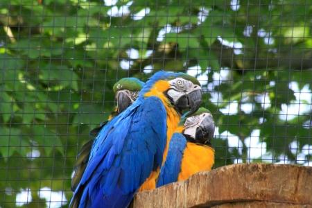 parrots Zdjęcie Seryjne