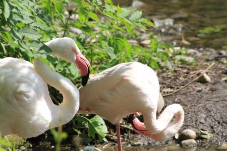 Flamingo Zdjęcie Seryjne
