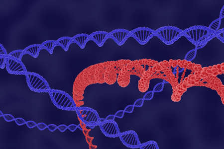 microscopic cellular structure: Red DNA Strand Highlighted with Blue Strands - 3D Illustration