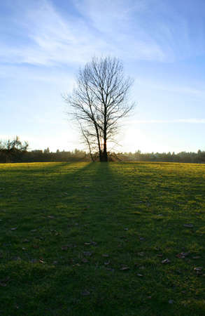 tree Stock Photo - 285984