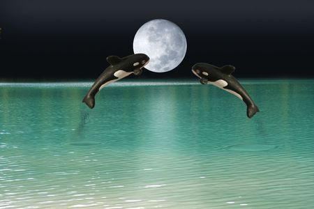 Killer whales over moon photo