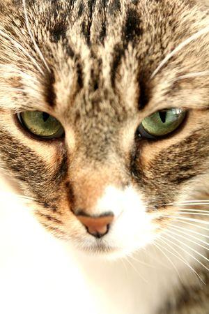 cat green eyes photo