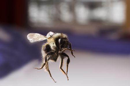 蜂の飛行をクローズ アップ 写真素材