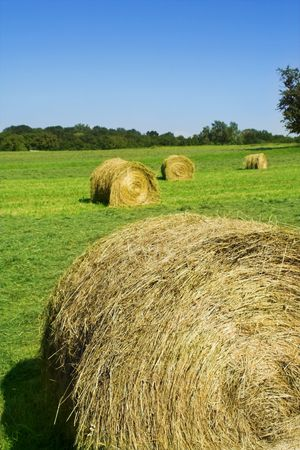 field with hay rolls Stock Photo - 491542
