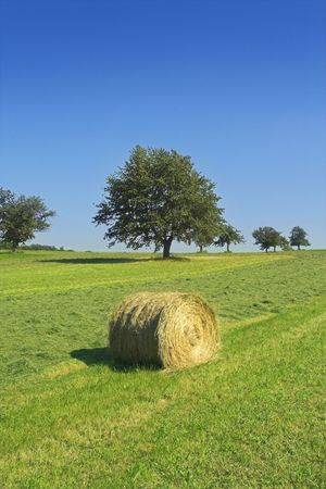 Field with hay rolls Stock Photo - 491539
