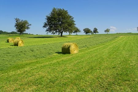 Field with hay rolls Stock Photo