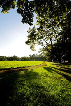 green path photo