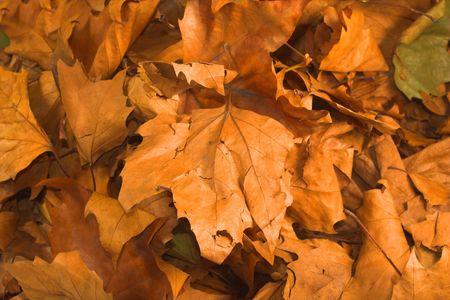 orange leaves on ground during fall season photo