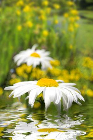 wide view of flowers in vancouver vandusen garden