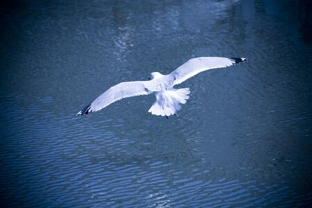 seagull fly by over water in blue tone Banco de Imagens