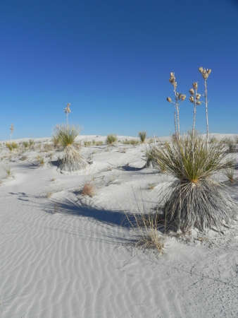 White Sands National Monument in New Mexico photo