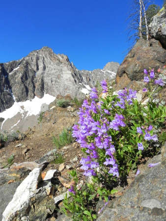 sawtooth national forest: Flowers and Thompson Peak in the Sawtooth Wilderness in Idaho