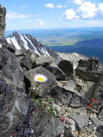 Bloem op top van Thompson Peak in Sawtooth Wilderness