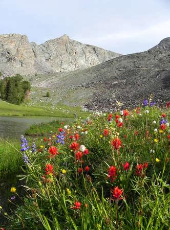 Wilde bloemen langs het meer hieronder Hyndman Peak in Pioneer Mountains in Idaho