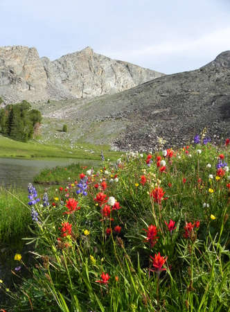 Wildflowers along lake below Hyndman Peak in Pioneer Mountains in Idaho