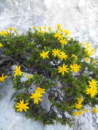 Yellow flowers in Guadalupe Mountains National Park in Texas photo