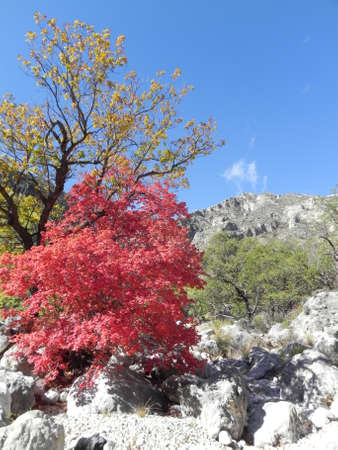 Devils Hall Trail in Guadalupe Mountains National Park in Texas Stockfoto