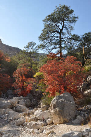 Fall trees in Guadalupe Mountains National Park photo