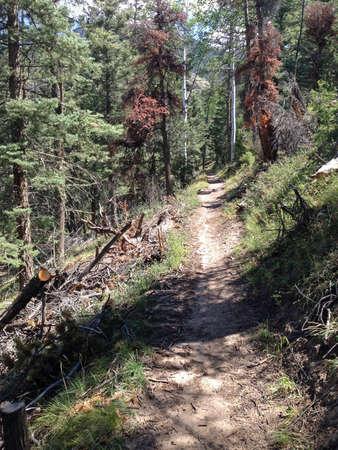 cristo: Willow Creek Trail in Sangre de Cristo Range