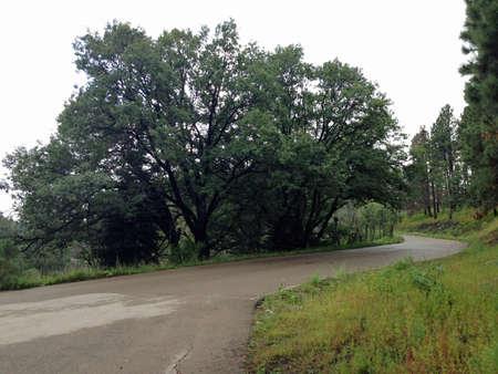 national forest: Oak Grove Campground en el Bosque Nacional Lincoln en Nuevo M�xico