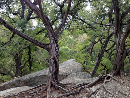 Trees on rocks in Dinosaur Valley State Park, Texas
