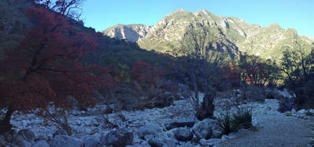 Morning in McKittrick Canyon in Guadalupe Mountains National Park, Texas photo