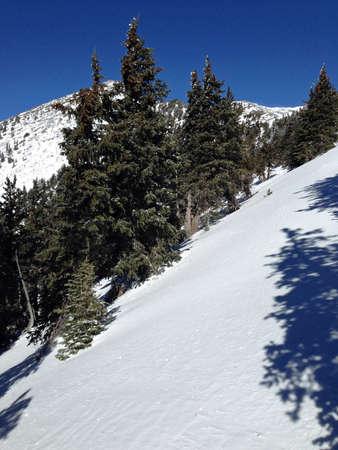 coconino national forest: Humphrey s Peak Trail in Coconino National Forest in Arizona Stock Photo