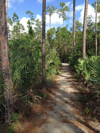 Pinelands parcours in Everglades National Park in Florida
