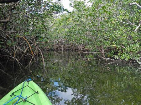 Kayaking through mangroves at John Pennekamp Coral Reef State Park in Florida Stock Photo