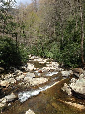tennesse: Arroyo de la monta�a en las Grandes Monta�as Humeantes, Tennessee