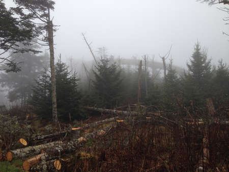 great smoky mountains: Summit of Clingmans Dome in Great Smoky Mountains Stock Photo