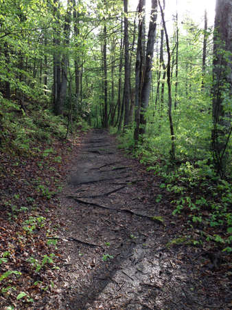 great smoky mountains: Trail in Great Smoky Mountains, Tennessee