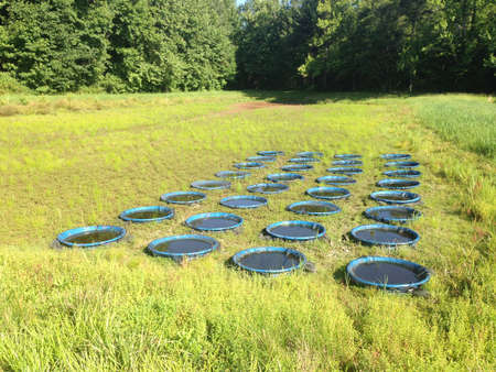 the experimental: Experimental array at the University of Mississippi Field Station Stock Photo