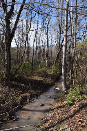 Stream in fall at the University of Mississippi Field Station
