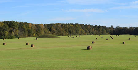 mounds: Pharr Mounds along Natchez Trace Parkway