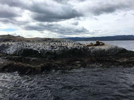 Aalscholvers en zeeleeuwen op een eiland in Argentinië Stockfoto