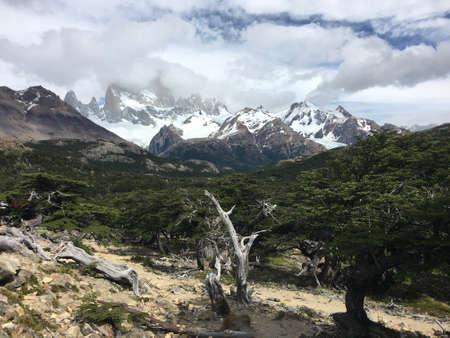 fitz roy: Forest below Fitz Roy in Argentina