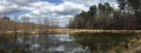 Early spring pond in Mississippi