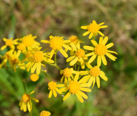 Small yellow flowers in Mississippi Stock Photo