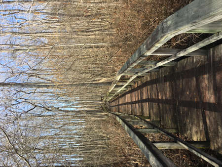 Boardwalk through forest in Mississippi in winter Stock Photo