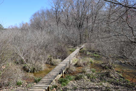 Small footbridge across the stream in Wall Doxey State Park, Mississippi Stock Photo
