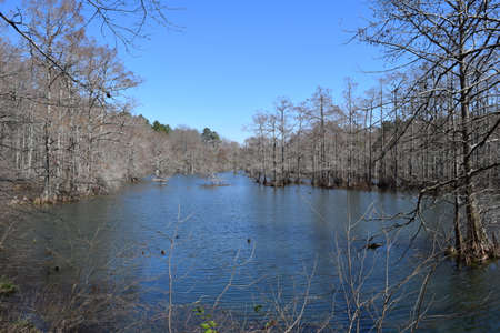 Cypress swamp in Wall Doxey State Park, Mississippi