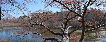 Red maple tree over the water in Wall Doxey State Park, Mississippi