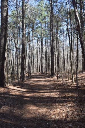 Hiking trail in Wall Doxey State Park, Mississippi Stock Photo