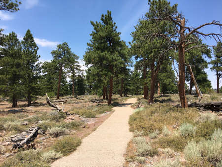 Walkway in Flaming Gorge National Recreation Area