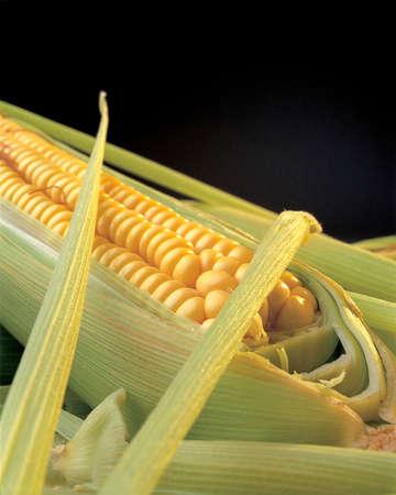 commodities: parcialmente abierta detalle de mazorca de maíz dejando el espectáculo su grano